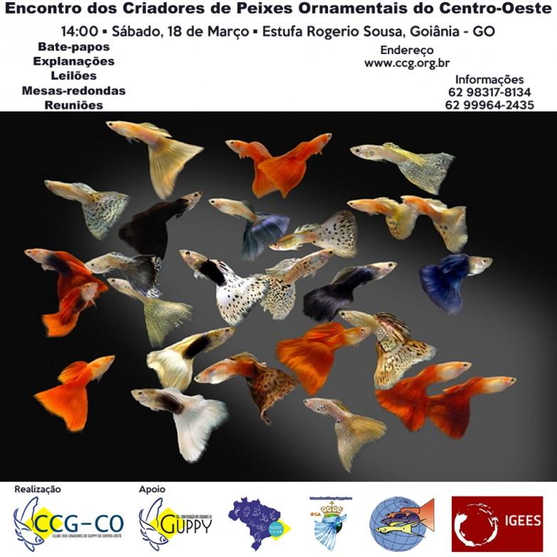 18-03-2017 ROGERIO GO